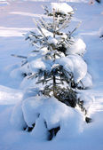 Snowy winter tree — Stock Photo