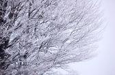 Winter tree — Stock fotografie