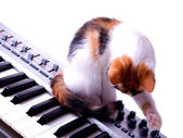 Cat sitting on the piano — Stock Photo
