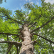 Magnificent tree — Stock Photo