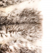 Fur cout — Stock Photo