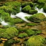 Moss,dam — Stock Photo #1729303