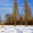 Winter, snow, pathway, poplars — Stock Photo