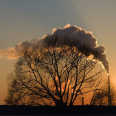 Smoke at sunset — Stock Photo