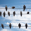 Birds on a Wire. Isolated on white. — Stock Photo