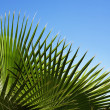 Palm's pattern — Stock Photo