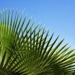 Stock Photo: Palm's pattern