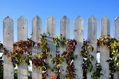 Batten fence — Stock Photo