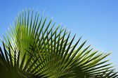 Palm's pattern — Stock Photo