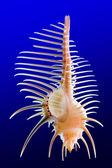 Seashell 1 — Stock Photo