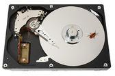 Hard disk, bug, two — Stock Photo