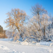 Trees,hoarfrost,frozen river — Stock Photo