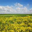 Crimea, yellow glade two — Stock Photo