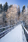 Köknar ağacı bir kar altında. portre. — Stok fotoğraf