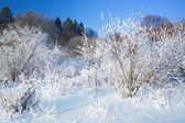 Bushes covered by hoarfrost. Landscape. — Stock Photo