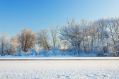 Trees covered by hoarfrost — Stock Photo