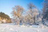Trees,hoarfrost,frozen river — Stock Photo