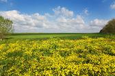 Crimea, yellow glade two — Stock Photo