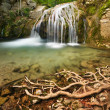 Waterfall and roots — Stock Photo