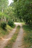 Village road — Stock Photo