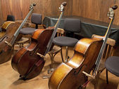 Three Contra basses — Stock Photo