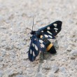 Stock Photo: Black butterfly