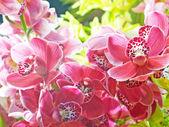 Orquídeas — Foto de Stock