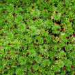 Stock Photo: Green moss