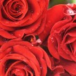 Close-up of red fresh roses — Stock Photo #2028303