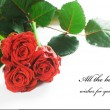Foto Stock: Red fresh roses on white