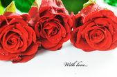 Rosas rojas frescas sobre fondo blanco — Foto de Stock