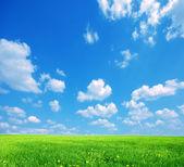 Natur bakgrund — Stockfoto