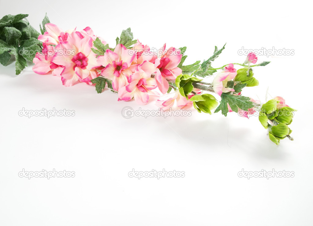 Spring flowers isolated on white background — Stock Photo #2027460