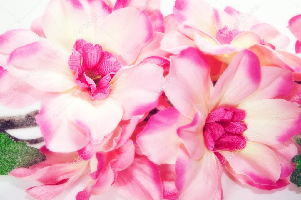 Pink fresh spring flowers background — Stock Photo #2027571