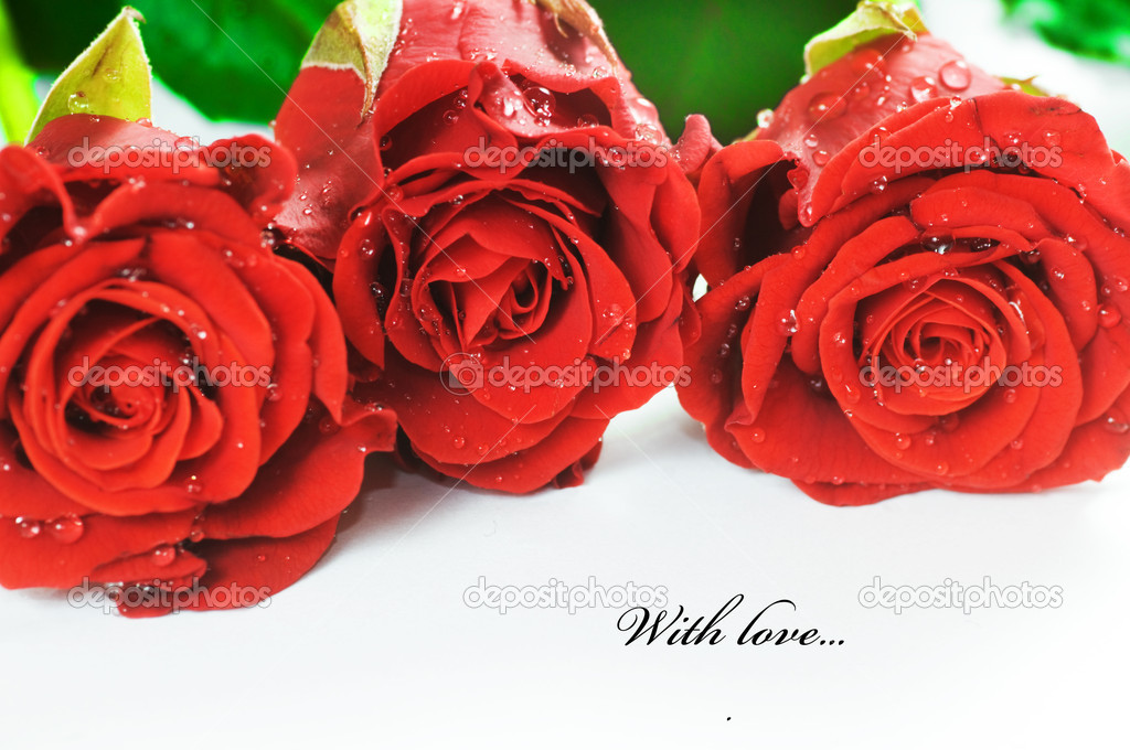 Red fresh roses on white background. Space for your text  — Stock Photo #2028131