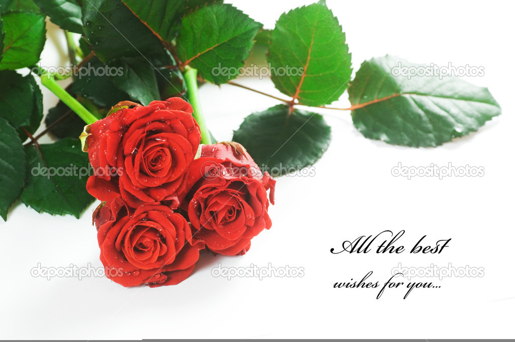 Red fresh roses on white background. Space for your text  — Stock Photo #2028412