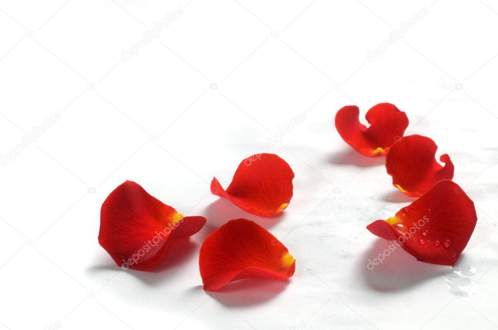 Fresh rose petals with water droplets on white background — Photo #2029430