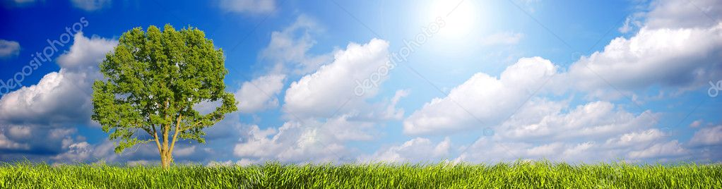 Sunny summer landscape panorama with tree. Clear and easy to use. — Stock Photo #2029567