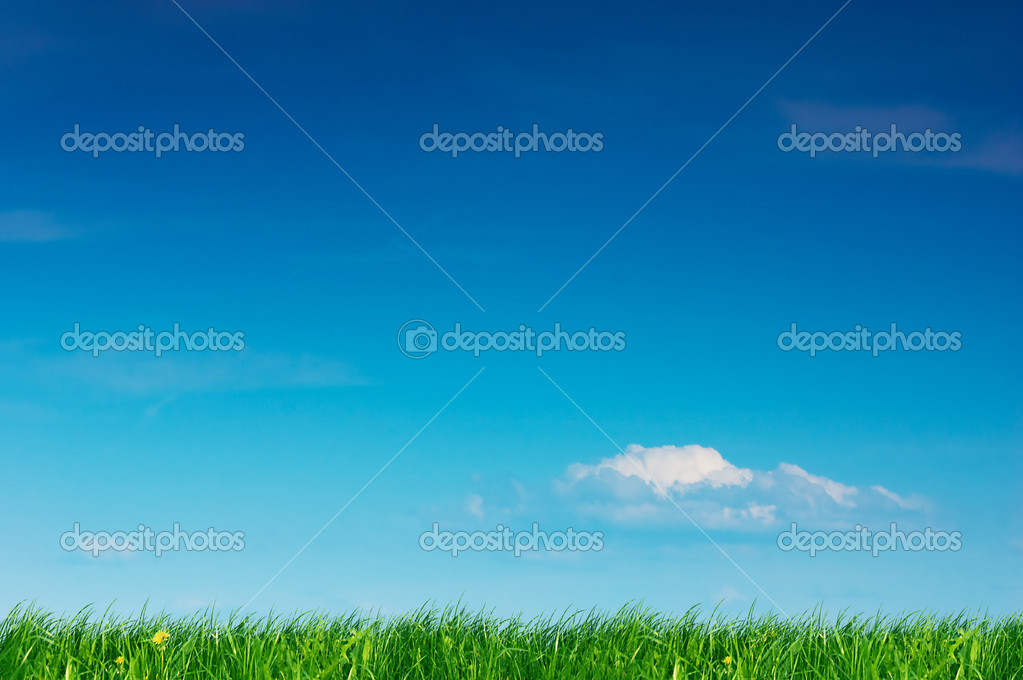 Nature background. Clear spring summer landscape with green grass and blue sky. — Stock Photo #2029679