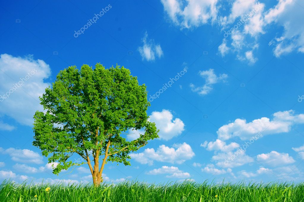 Nature background. Clear spring summer landscape with green grass, tree and blue sky. — Stock Photo #2029949