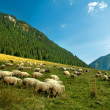 Sheep farm in the mountains - Stock Photo
