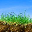 Ground, grass, sky cross section - Stock Photo