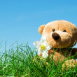 Teddy bear on grass — Stock Photo