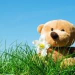 Teddy bear on grass — Stock Photo