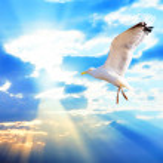 Majestic bird against sunset sky — Stock Photo