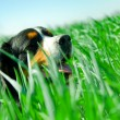 A cute dog in the grass - Stock Photo