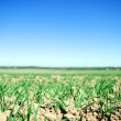 Stock Photo: Plain field lanscape