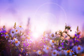 Spring flowers field — Stockfoto