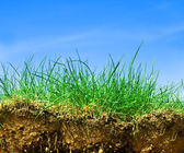 Ground, grass, sky cross section — Stock Photo