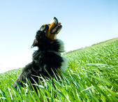 A cute, healthy dog on the field — Stock Photo